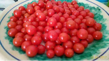 La passata di pomodoro, un rito di famiglia!